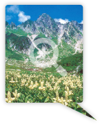 中央アルプスは高山植物の宝庫